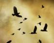 tmb000001_Clun_Castle_red_kite