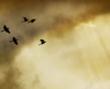 tmb000003_Clun_Castle_red_kite