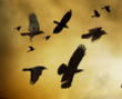 tmb000009_Clun_Castle_red_kite