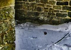 Chirbury-Church-with-death_48