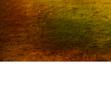 tmb000027_Clun_red_kite_no_ch