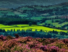 cordon-hill-view-very-very-long_39