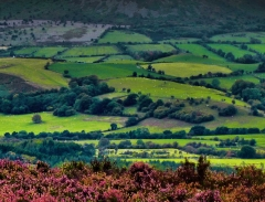 cordon-hill-view-very-very-long_41