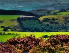 cordon-hill-view-very-very-long_46