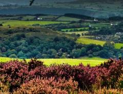 cordon-hill-view-very-very-long_47