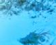 tmb000046_ironbridge_blue_w_s
