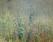 tmb000020_Ironbridge_painted_