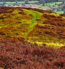 long-mynd-church-stretton-colse-up3_11