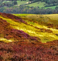 long-mynd-church-stretton-colse-up3_12