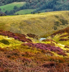 long-mynd-church-stretton-colse-up3_13