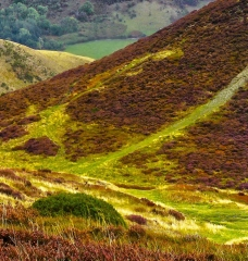 long-mynd-church-stretton-colse-up3_14