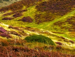long-mynd-church-stretton-close-up-long-32-x-237_41