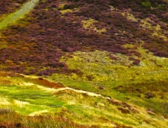 long-mynd-church-stretton-close-up-long-32-x-237_42