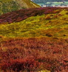 long-mynd-wrekin-to-caradoc_12