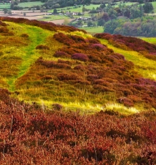 long-mynd-wrekin-to-caradoc_13