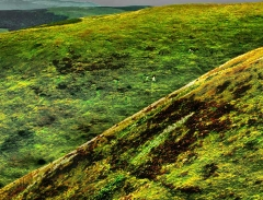 long-mynd-zoomed-sheep-very-very-long-bright_30
