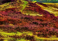 long-mynd-zoomed-out-bright3_28