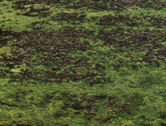 long-mynd-zoomed-sheep-very-very-long_32