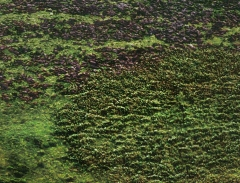 long-mynd-zoomed-sheep-very-very-long_33