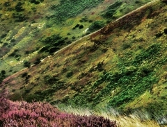 long-mynd-zoomed-sheep-very-very-long_46
