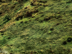 long-mynd-zoomed-sheep-very-very-long_47