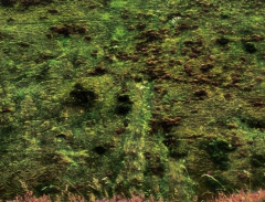 long-mynd-zoomed-sheep-very-very-long_49