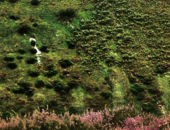 long-mynd-zoomed-sheep-very-very-long_50