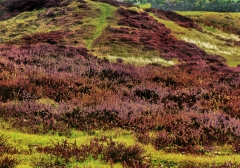 long-mynd-zoomed-out-desaturated_28