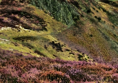 long-mynd-zoomed-out-desaturated_30