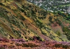 long-mynd-zoomed-out-desaturated_31