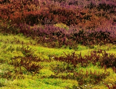 long-mynd-zoomed-out-greyer-very-very-long_39