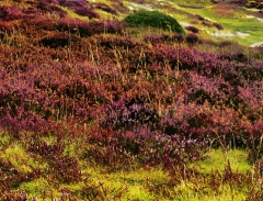 long-mynd-zoomed-out-greyer-very-very-long_41