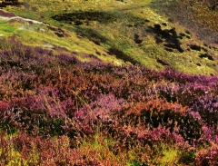 long-mynd-zoomed-out-greyer-very-very-long_42