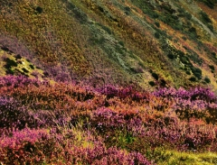long-mynd-zoomed-out-greyer-very-very-long_43