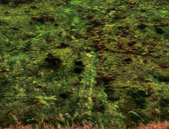 long-mynd-zoomed-out-greyer-very-very-long_49