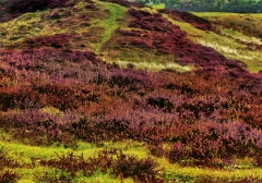 long-mynd-zoomed-out-greyer_28