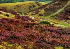 long-mynd-zoomed-out-greyer_29