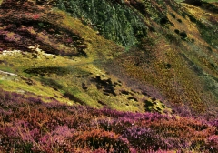 long-mynd-zoomed-out-greyer_30