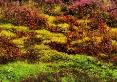long-mynd-zoomed-out-greyer_42