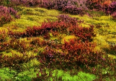 long-mynd-zoomed-out-greyer_43