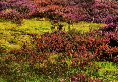 long-mynd-zoomed-out-greyer_44