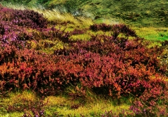 long-mynd-zoomed-out-greyer_45