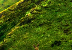 long-mynd-zoomed-sheep-hares_33