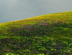 long-mynd-zoomed-sheep-very-very-long_16