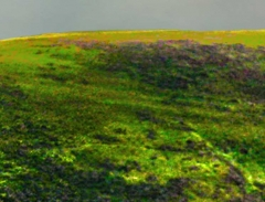 long-mynd-zoomed-sheep-very-very-long_17