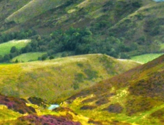 long-mynd-zoomed-sheep-very-very-long_23
