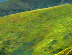 long-mynd-zoomed-sheep-very-very-long_29