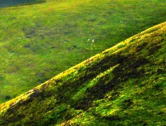 long-mynd-zoomed-sheep-very-very-long_30