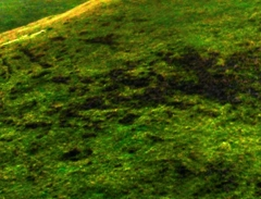 long-mynd-zoomed-sheep-very-very-long_31