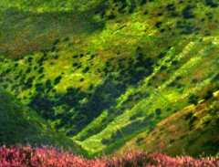 long-mynd-zoomed-sheep-very-very-long_45